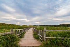 Een houten brug over een moeras in Cavendish Dunelands Royalty-vrije Stock Foto's