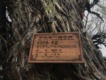 een houten die teken op de boom wordt geplaatst stock afbeeldingen