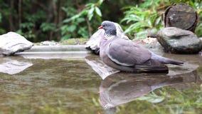 Een houten duif