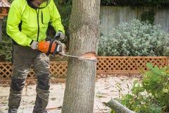 Een houthakker snijdt een boom met een kettingzaag royalty-vrije stock fotografie