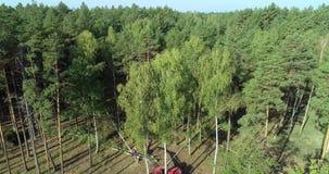Een houthakkersmachine haalt een boom neer, haalt een rode houthakkersmachine berk neer stock video