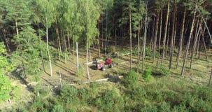 Een houthakkersmachine haalt een boom neer, haalt een rode houthakkersmachine berk neer stock footage