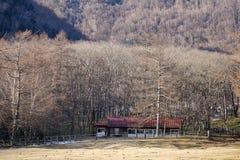 Een huis dat bij het bos van de pijnboomboom in Takayama, Japan wordt gevestigd Stock Afbeelding