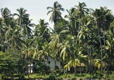 Een huis in het midden van palmen op de kust Stock Foto
