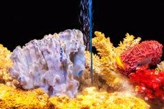 Een huisaquarium met exotische vissen en multicolored koralen Stock Afbeeldingen