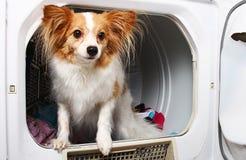 Een huisdierenhond in een drogere machine stock fotografie