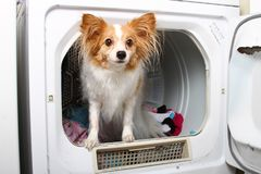 Een huisdierenhond in een drogere machine royalty-vrije stock fotografie