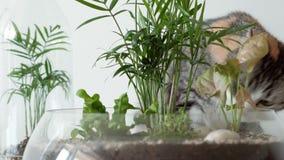 Een huisdierenkat snuift groene installaties in glaspotten onder dekking stock video