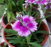 een huisvlieg en een bloem Royalty-vrije Stock Afbeeldingen