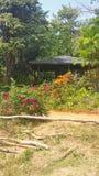 een hut in de wildernis stock afbeeldingen