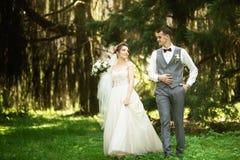 Een huwelijkspaar geniet van lopend in het hout De jonggehuwden koesteren en houden handen stock afbeelding