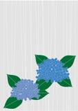 Een hydrangea hortensia vector illustratie