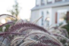 Een hydrangea hortensiabloem is een gedicht royalty-vrije stock afbeeldingen