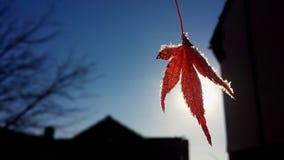 Een ijzig blad in de Herfst royalty-vrije stock afbeeldingen