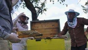 Een imker inspecteert een bijenkorf van bijen stock footage