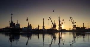 Een industriële overzeese terminal met ladingskranen en de auto's van de spoorwegcontainer op zonsopgang Grote kranen in haven Ku stock video