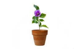 Een ingemaakte bloem Stock Foto