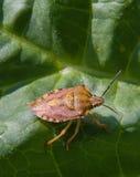 Een insect royalty-vrije stock afbeeldingen