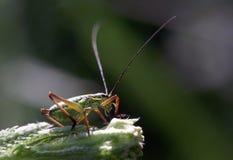Een insect Stock Afbeeldingen