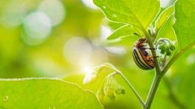 Een insect die zich op de installatie bevinden royalty-vrije stock afbeeldingen