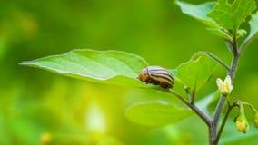 Een insect die zich op het blad bevinden royalty-vrije stock afbeeldingen