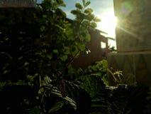 Een insect met licht van zon stock afbeelding
