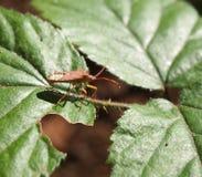 Een insect op een blad stock foto's