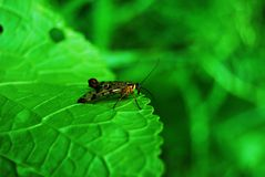 Een insect op een groen blad Royalty-vrije Stock Foto
