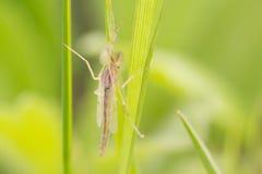 Insect onder het gras Royalty-vrije Stock Foto's