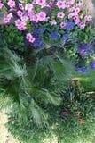 Een interessante mening die van hierboven over bloemen in de tuin groeien Royalty-vrije Stock Afbeelding