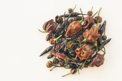 Een inzameling van bruin, chocolade en zwarte chilis Stock Afbeelding