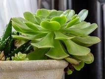 Een inzameling van cactussen in een pot royalty-vrije stock foto's