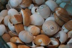 Een inzameling van Kleurrijke shells stock foto's