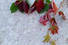Een inzameling van mooie kleurrijke de herfstbladeren, die op een grijze achtergrond van beton wordt geplaatst royalty-vrije stock foto