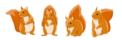 Een inzameling van rode eekhoorns in divers stelt Wilde dieren van het bos vector illustratie