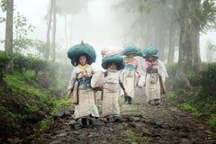 Een inzameling van thee plukkende landbouwers in Indonesië royalty-vrije stock foto