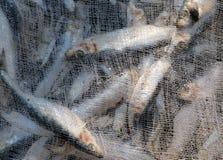 Een inzameling van vissen onder een net in Baku, Azerbeidzjan Royalty-vrije Stock Foto