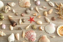 Een inzameling van zeeschelpen stock fotografie