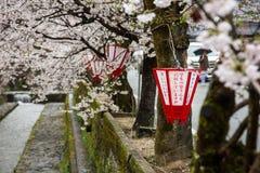 Een Japanse lantaarn en een mooie sakura komen een boom tot bloei Royalty-vrije Stock Fotografie