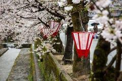 Een Japanse lantaarn en een mooie sakura komen een boom tot bloei Royalty-vrije Stock Foto's