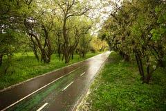 Een joggingspoor nat na regen, met witte gevallen kersenbloemblaadjes dat wordt overgoten stock foto