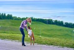 Een jong blondemeisje leidt een hond van het ras Amerikaanse Staf op stock foto