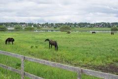 Een jong bruin veulen met een kleine witte vlek op een groene en gele de zomerweide Bruin moederpaard Oude rachitische omheining Stock Foto's