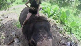 Een jong Europees meisje zit blootvoets schrijlings op een olifant in de wildernis van Sri Lanka stock footage