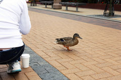 Een jong meisje en een slimme vogel in voetstreek Stock Foto