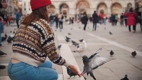 Een jonge aantrekkelijke vrouw zit in het vierkant Voedende duiven van handen stock videobeelden