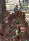 Een jonge aap zit op het termietnest Stock Foto