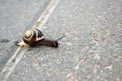 Een jonge gestreepte slak kruipt langs straatstenen Royalty-vrije Stock Foto's
