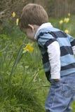 Een jonge jongen die een gele narcis ruikt Royalty-vrije Stock Afbeeldingen