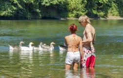 Een jonge knie van de paartribune diep in rivier als ganzen drijft langs Royalty-vrije Stock Foto's